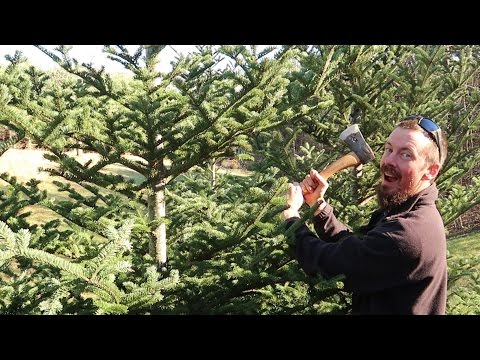 Chopping Down Our Charlie Brown Christmas Tree!