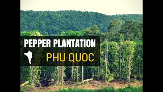 Phu Quoc Pepper Plantation Farm Tour