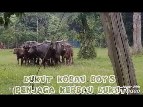 LUKUT KOBAU BOYS
