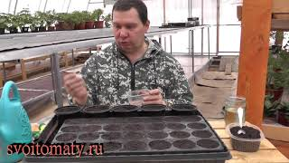 Мини грядка для дома – редис и салат