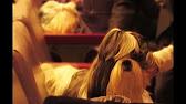 Стрижка собак Омск +7(3812) 38-78-67 зоосалон Fashion Dog - YouTube
