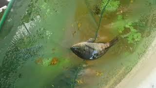 Do aquário ao berçário!!!
