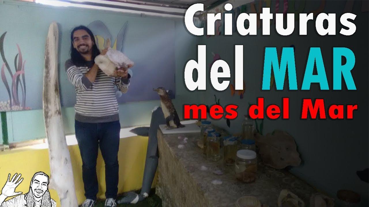 Criaturas del Mar | #MesDelMar