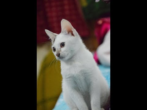 When the cat watches cats video || Smart Cat