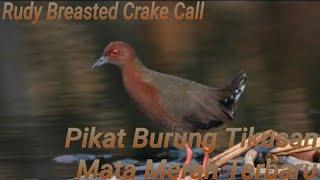 Mp3 SUARA BURUNG TIKUSAN MERAH | cocok buat pikat atau pancingan jebakan burung tikusan merah