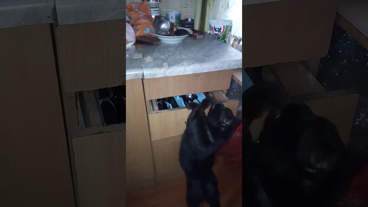 Перекус в кота