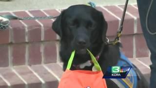 Dog Walk Benefits Canine Companion Program