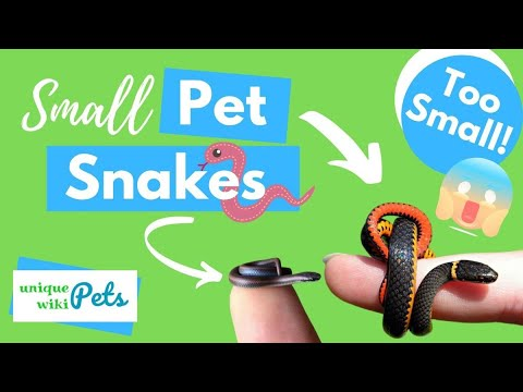 21 Small Pet Snakes That Forever Stay Small For You To Keep As Pets Uniquepetswiki Com Youtube