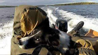 Тайга у Белого моря. Часть 1. Заброска
