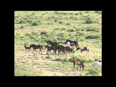 The Wild Horses Of Fifteen Mile - Washakie County, Wyoming
