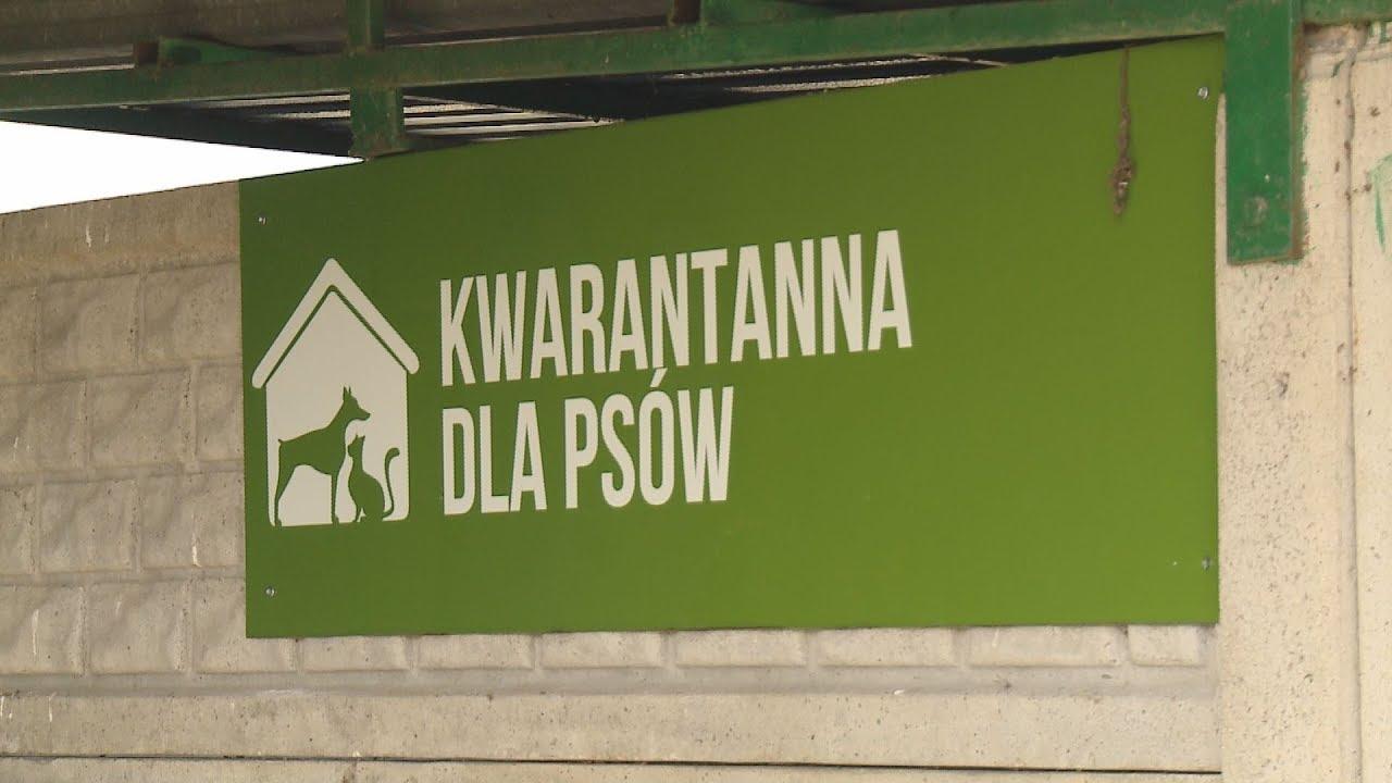 TKB – Uratowany szczeniak przechodzi kwarantannę – 17.10.2017