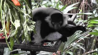 Сингапурский зоопарк. Грустное животное.