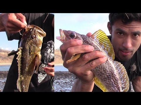Catching 5 Species Of Fish In 15 Minutes!!! Catch And Release