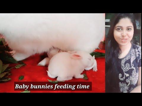 How Much Milk Baby Bunnies Need    Bunnies Feeding Time