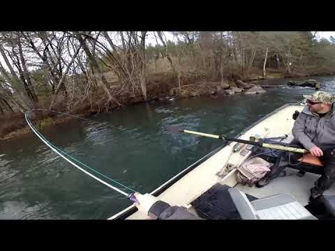 Wild Steelhead On Rogue River, OR - 01/02/2020