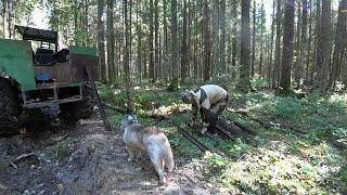 Немецкая каска! Немецкие рельсы! Разведка удалась! Лесной коп металла!