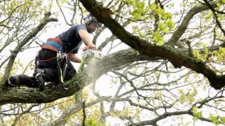 Big Oak Take Down - Sussex Tree Works