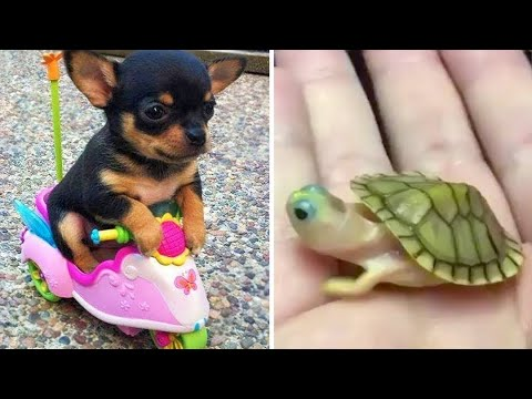 Baby Animals 🔴 Funny Cats and Dogs Videos Compilation (2020) Perros y Gatos Recopilación #35