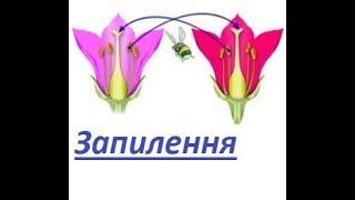 Запилення квіток-біологія 6 клас