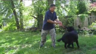 Black German Shepherd Puppy: Training From 10 Weeks To 10 Months