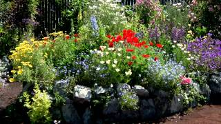 How to Make Can't Go Wrong Plant Combinations!