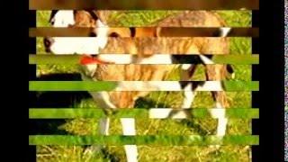 собаки 13