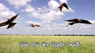 Mage Swamini - Krishall Magage - Lyrics  - hymn for the weekend - Sinhala geethika