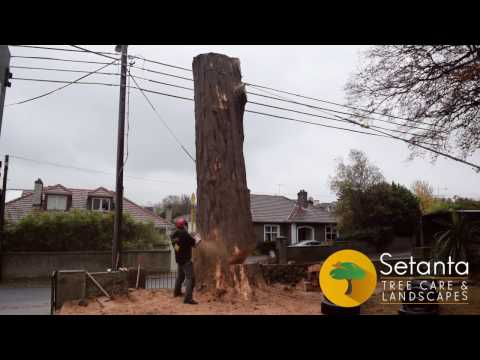 Setanta Tree Removal - South Dublin 2016