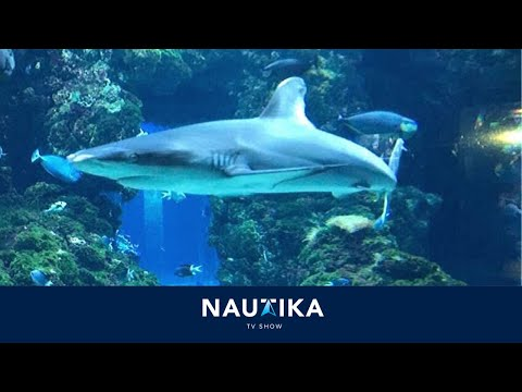 NAUTIKA TV Show at Oceanographic Museum of Monaco