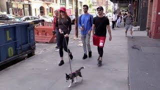 Game of Thrones Sophie Turner and BF Joe Jonas take their dog for a walk in NYC