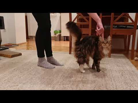 Macska trükkök // Cat tricks