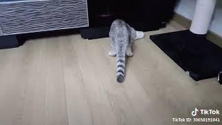 Cute Pet Cat Video On Tiktok
