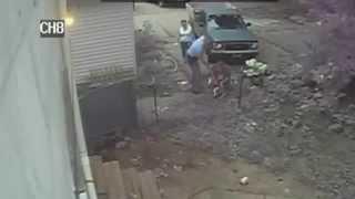 Cctv - Pit Bull Attacks Neighbours Pb & Bites Guy