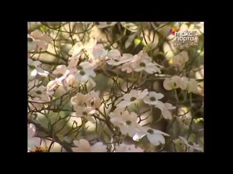 В Дендрарии зацвели экзотические растения