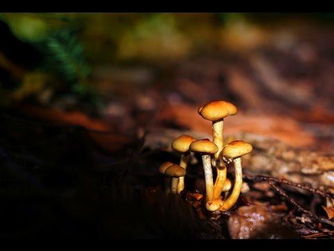 Joe Natta - LA CANZONE DEI FUNGHI (The Mushrooms song)