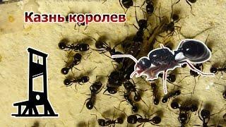 Почему муравьи устраивают массовые казни над своими матками?