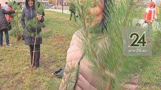 В парке «СемьЯ» высадили 300 саженцев сосны и березы