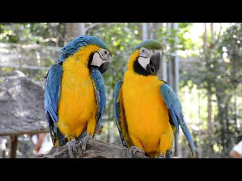พาเที่ยว ! สวนสัตว์ ขอนแก่น khon kaen Zoo Thailand