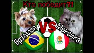 Бразилия - Мексика. Кто победит? ЧМ по футболу - 2018. Животные-предсказатели