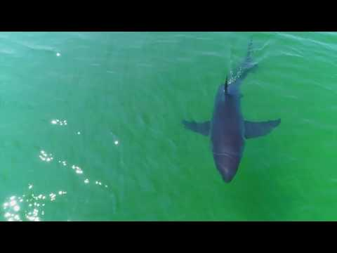 Just Offshore // Sharks and Whales - Truro & Wellfleet, Cape Cod