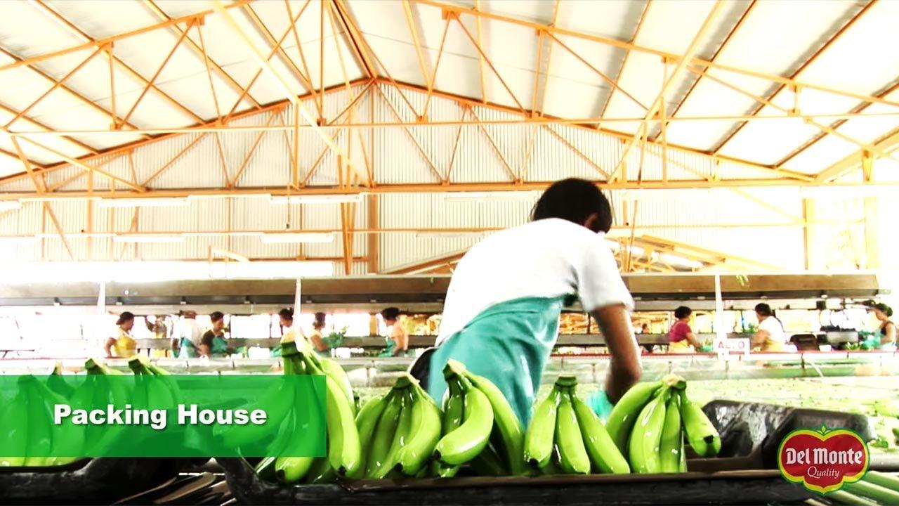 Bananas | Del Monte Fresh