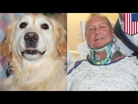 Hero golden retriever: Injured owner saved from freezing to death on NYE by loyal dog - TomoNews
