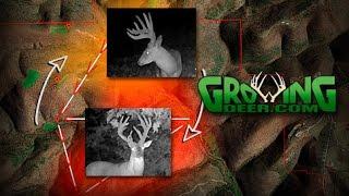 Deer Hunting Strategies: How to Tag a Hit List Buck (#354) @GrowingDeer.tv