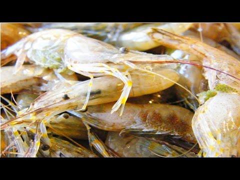 Curso Cultivo de Camarões de Água Doce - Reprodução Induzida