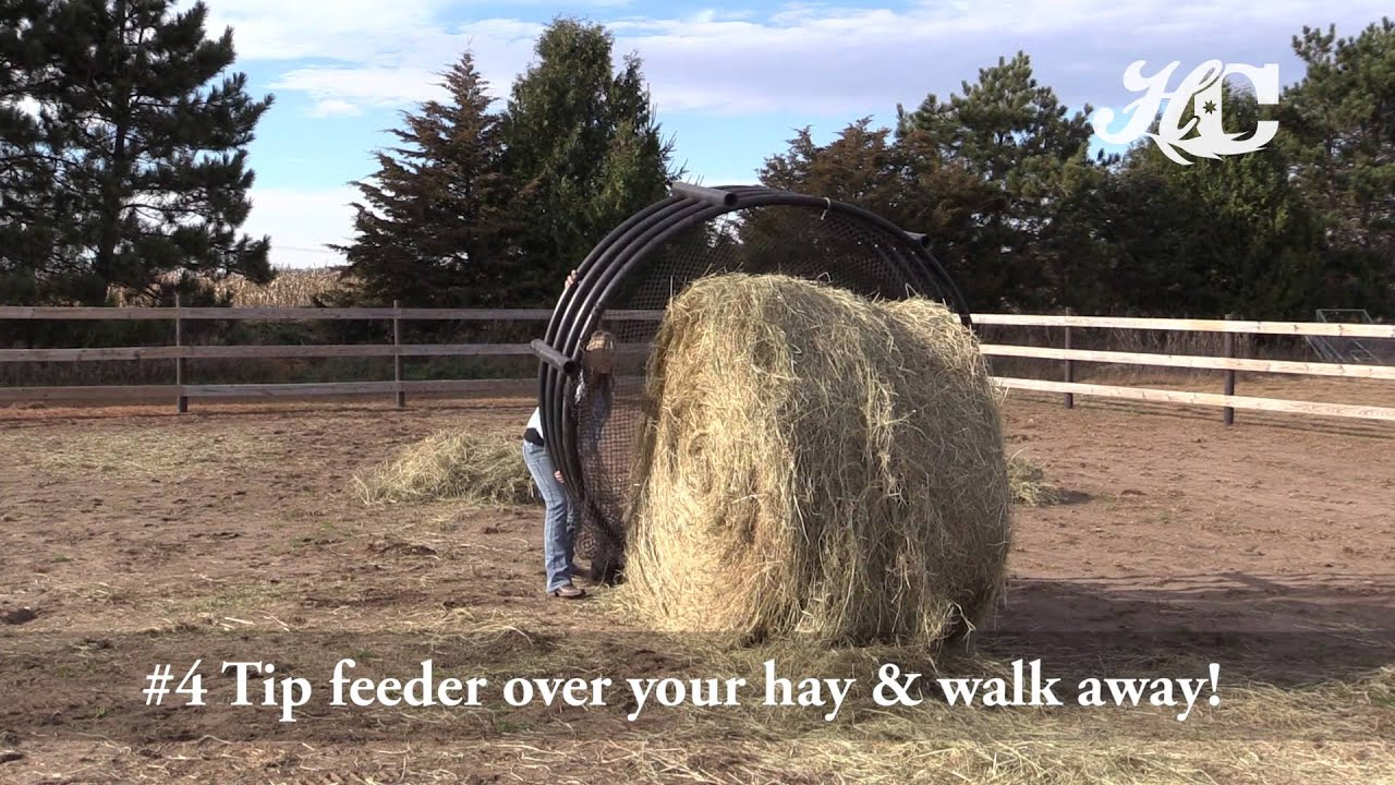 feeders dancing img donkey hay perfected horse slow feeder the