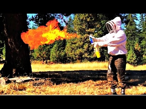 How To Get Rid Of Wasps With Fire