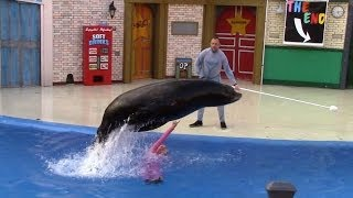 Sea Lions Tonite: Full Show at SeaWorld San Diego (6/24/14)