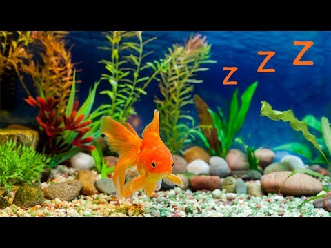 🐠 Baby Lullaby And Freshwater Aquarium ❤️ Bedtime Lullabies