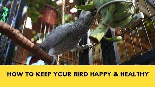 Forget Bird Toys - Here's How I Keep Smokey Busy & Happy