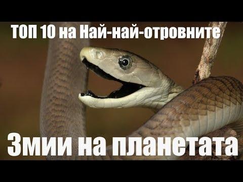 Топ 10 Най-Най-Отровните змии на планетата